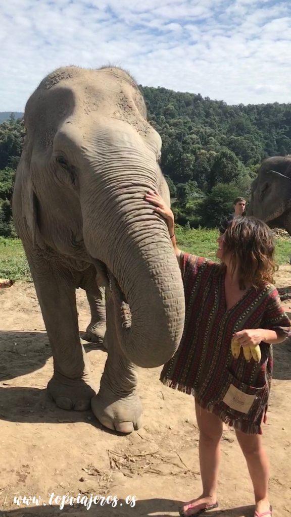 Elephant Jungle Santuary Chiang Mai (Tailandia)